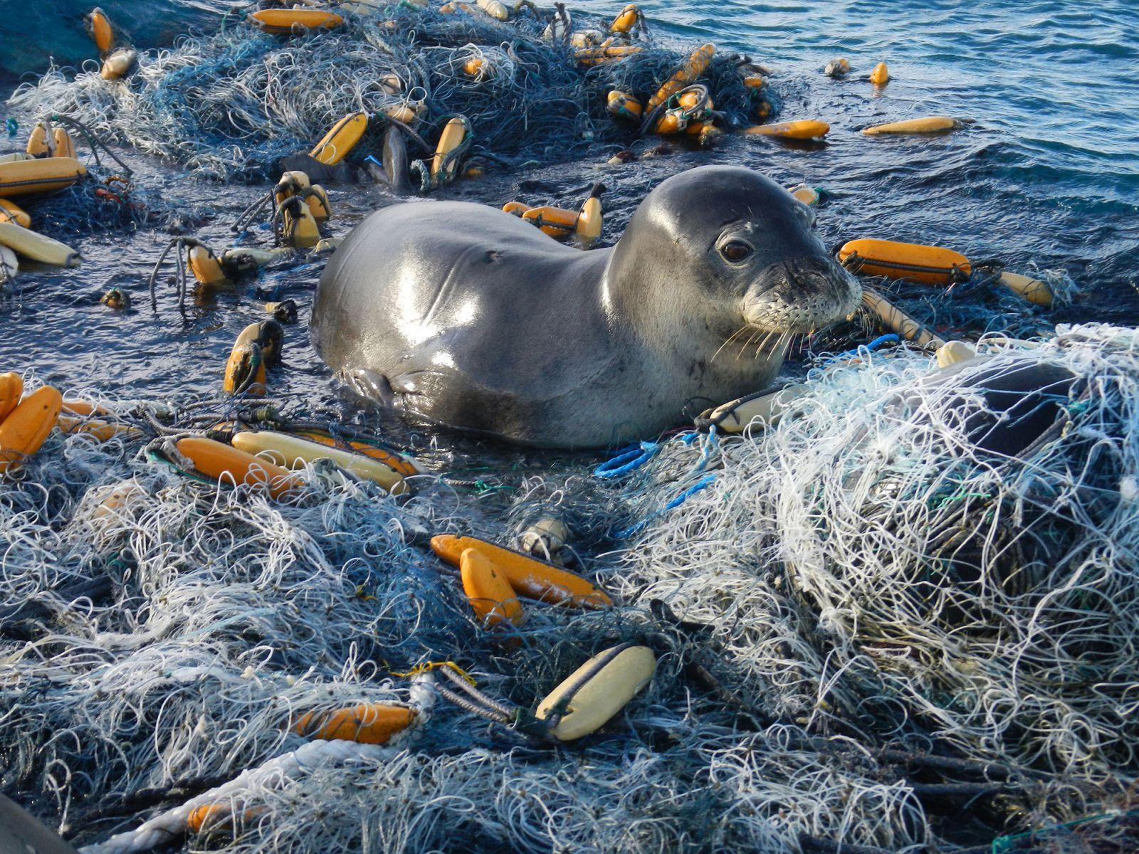 ocean-service-noaa-marine-debris