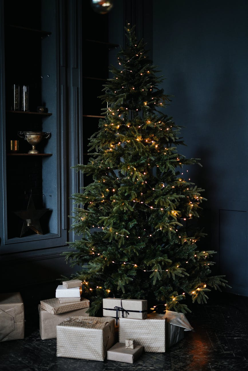 boxed under festive tree by blue wall